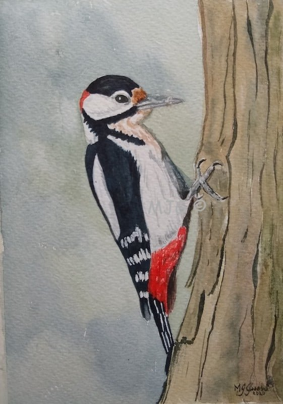 "Great Spotted Woodpecker - watercolour - (7""x5"")"