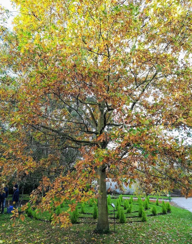Oak Tree Memorial Garden Autumn Colours 22.11.19