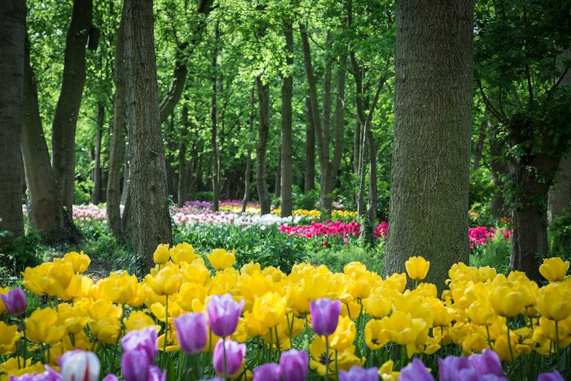 Springfields_Garden_May_201575-X2